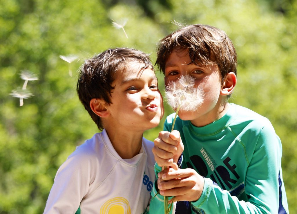 Two young boys blowing on a dandelion flower